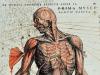 Annotazioni a margine di unillustrazione nel libro De humani corporis fabrica (fonte: Biblioteca Civica Romolo Spezioli, Fermo. Call no.: 1e7n.1582)