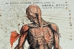 Annotazioni a margine di un'illustrazione nel libro 'De humani corporis fabrica' (fonte: Biblioteca Civica Romolo Spezioli, Fermo. Call no.: 1e7n.1582)