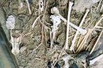 Macabra scoperta a Marsala, turisti trovano una fossa comune di cani