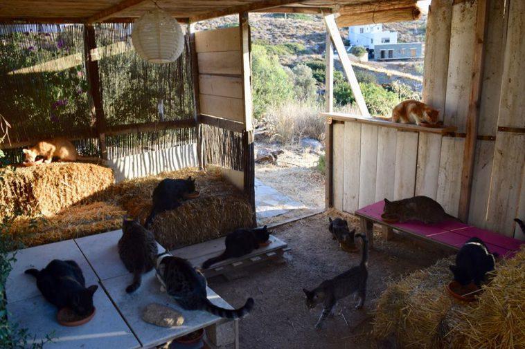 Cercasi Accarezzatore Di Gatti In Grecia In Cambio Stipendio Vitto