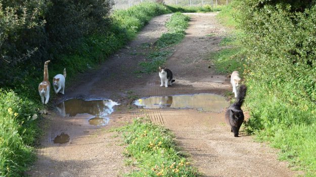 gatti uccisi marsala, Trapani, Cronaca