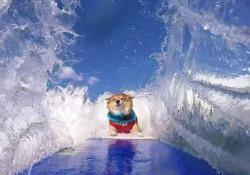 """Dare del """"cane"""" a un surfista, almeno in questo caso, non è più un insulto"""