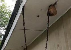 Impressionante il livello di intelligenza delle formiche