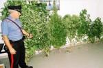Sorpreso a coltivare ventisei piante di marijuana: arrestato a Sortino