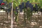 Sequestrati venti chili di marijuana a Palma di Montechiaro: arrestati zio e nipote