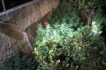 Mazara del Vallo, scoperta una piantagione di cannabis: scattano due arresti