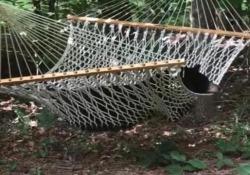 Un orso nero ha invaso un giardino privato in Carolina del Nord, e si è accomodato sull'amaca