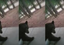 Il video arriva da Woodland Park, in Colorado (Usa)