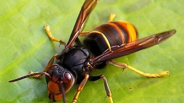 assalito dalle vespe, Giacomo Pisciotta, Trapani, Cronaca