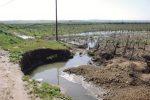Vigneti danneggiati da piogge e umidità nel Trapanese: a rischio la produzione