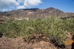 Agricoltura: Efsa conferma tossicità verderame