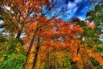 L'arrivo dell'autunno è salutato da Venere, più brillante che mai (fonte: paul bica, Flickr)