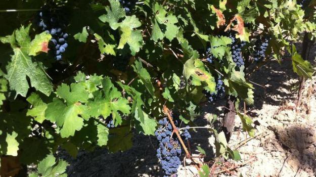 vino sicilia, Sicilia, Economia