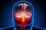 Il cervello umano programmato per essere un predatore (fonte: Ars Electronica, Flickr)