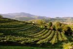 Miinistro Centinaio venerdì al Consorzio vini Valpolicella