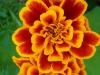 Individuato il gene che ogni mattina risveglia i fiori (fonte: Max Pixel)