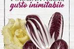 Uva e radicchio protagonisti campagna qualità ortofrutticola