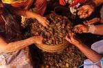 """Degustazioni e letture a Vicari, prende il via il """"Mandorlo Fest"""""""