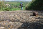 Da Mozia a Camarina, parte il cammino internazionale dell'Antica trasversale Sicula