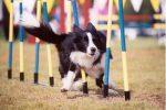 Oltre 40 cani in gara, a Palermo l'evento Agility: il video