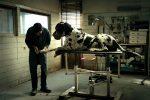"""L'Italia agli Oscar, """"Dogman"""" di Matteo Garrone è il candidato per il miglior film in lingua straniera"""