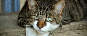 Il gatto amico del... cuore: studio spiega perchè adottarne uno allunga la vita