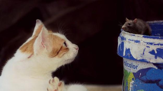 gatti topi predatori, Sicilia, Società
