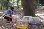 Sequestrati e liberati 26 cardellini tra Palermo e Lercara Friddi, due denunce