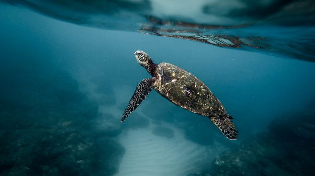 tartarughe marine plastica, Sicilia, Società