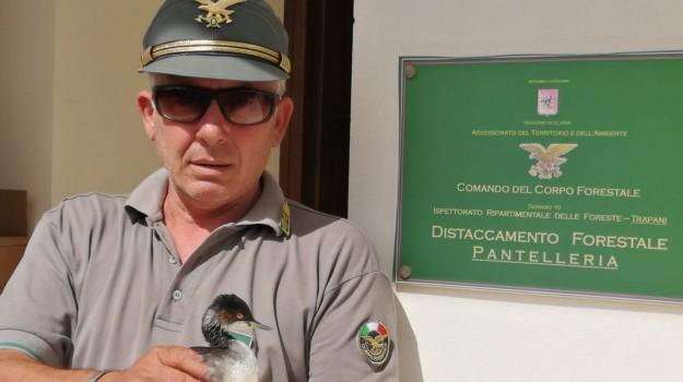 volatile soccorso pantelleria, Trapani, Società