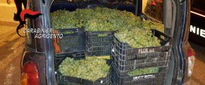 In auto con sette quintali di uva rubata, tre denunce a Licata