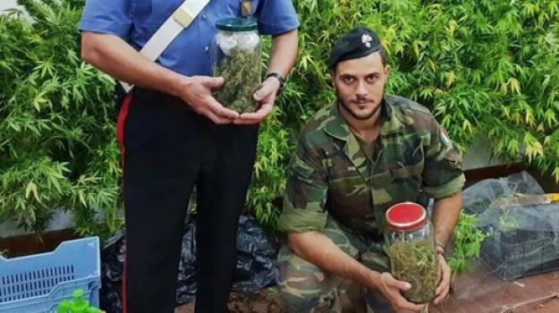 piantagione di marijuana a Biancavilla, Catania, Cronaca
