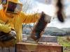 De Castro, creare un piano settoriale sul miele in Europa