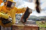 Coldiretti, api tornano in Emilia-Romagna dopo biennio nero