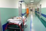 Medico licenziato in Calabria, puliva le seppie in bagno