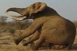 Le immagini affascinanti provengono dal Kenya: tecnici e veterinari impegnati nell'operazione