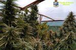 Scoperta una piantagione di marijuana a Siracusa, arrestati due fratelli