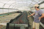 Furto in un'azienda vitivinicola a Pantelleria: rubati sei quintali di zibibbo