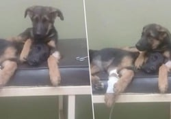 I due animali ricoverati a causa di un virus potenzialmente letale
