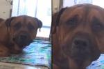 La clip postata sui social dai responsabili di un rifugio per cani in California. La storia però ha un lieto fine