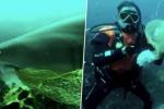 Il subacqueo toglie dalla bocca del predatore una rete da pesca