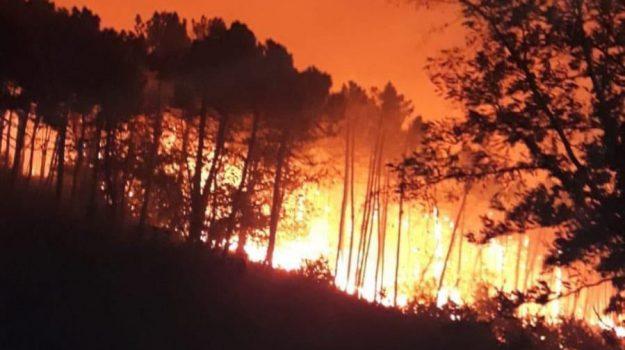 Incendi a Palermo, vigili del fuoco, Palermo, Cronaca