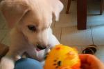 Gli 11 cagnolini sono stati adottati. Michela Vittoria Brambilla: «Inasprire le pene per chi maltratta gli animali»