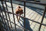 Animali maltrattati in un maneggio abusivo a Catania, denunciati i proprietari