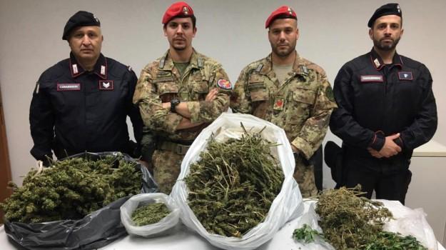 piantagione marijuana mineo, Catania, Cronaca