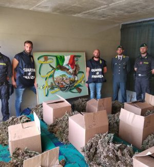 Partinico, scoperto casolare con all'interno 166 chili di marijuana: denunciato il proprietario