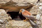 Gli scatti dalla natura di Margarese: mostra a Godrano