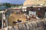 Trasforma il parco comunale in stalla e discarica a Vittoria: multa da 7 mila euro