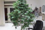 Coltivava una pianta di marijuana sul balcone, operaio arrestato a San Cataldo