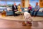 La proprietaria ospite col suo husky in un programma sulla tv inglese